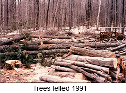 Trees felled 1991