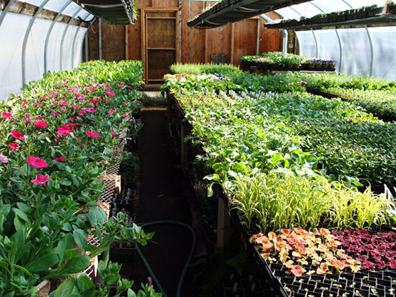 greenhouse_color72-575